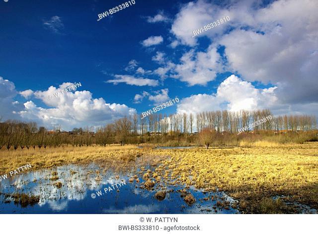 marsh meadows of Snippenweide nature reserve, Belgium, Scheldevallei