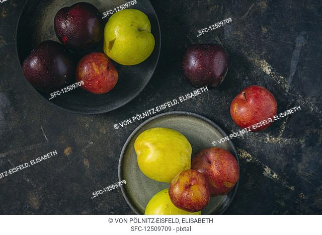 Colourful plums on a grey surface