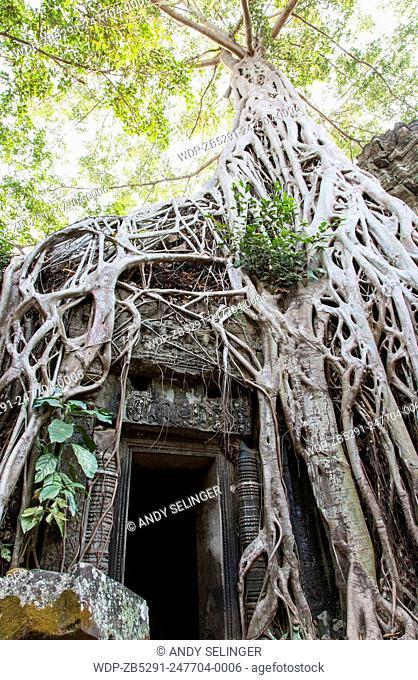 Ta Prohm Temple (Rajavihara), Angkor, Siem Reap, Cambodia