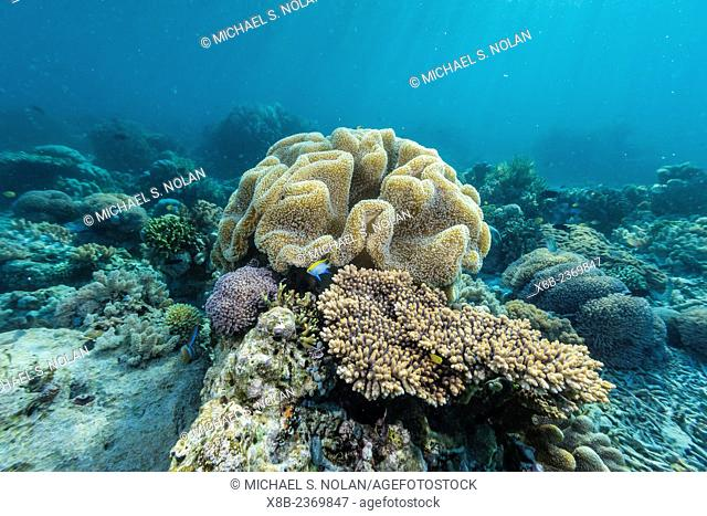 A profusion of hard and soft coral underwater on Tengah Besar Island, Komodo National Park, Indonesia