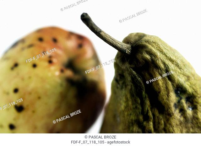 Close-up of a rotten apple and a pear