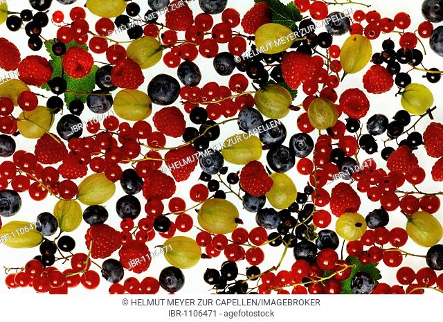 Different kinds of fruit, raspberries, gooseberries, red and black currants, blueberries