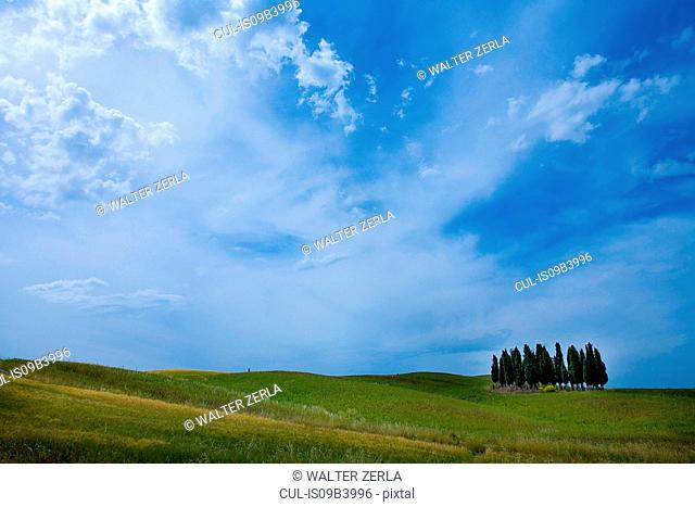 Field with group of Cypress trees, Val d'Orcia, Siena, Tuscany, Italy