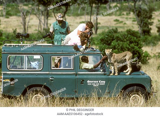 Game Watcher's Surprise Cheetah on vehicle Mara, Kenya