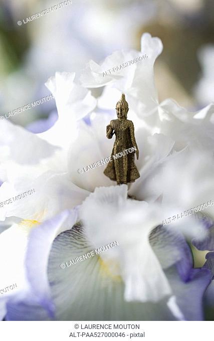 Miniature Buddha figurine standing in center of iris