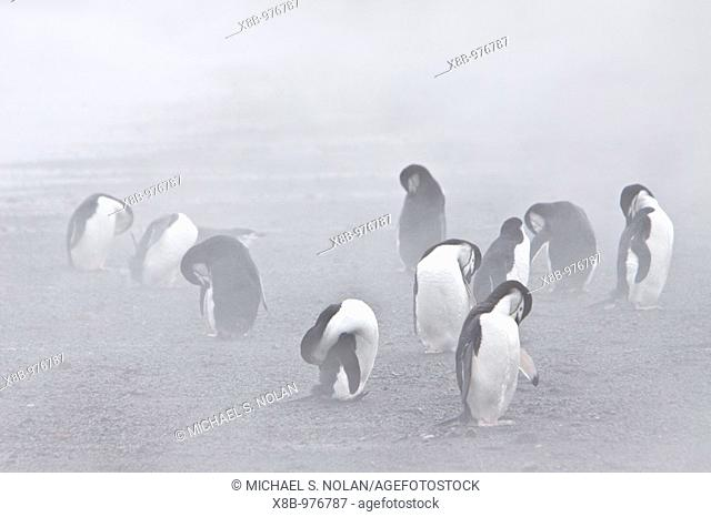 Penguins on Deception Island. South Shetland Islands off the Antarctic Peninsula