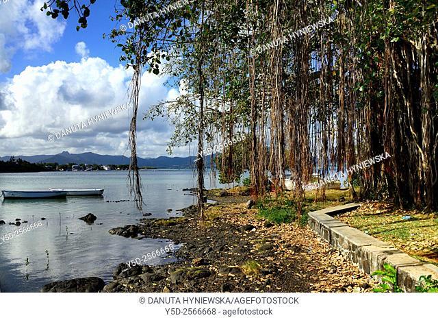 Africa, Mascarene, Mascarene Islands, Mascarenhas, Mauritius, Southeastern coast of Mauritius, Grand Port District, suburbs of Mahébourg, Banyan tree