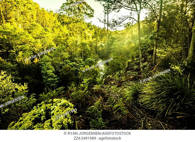 Gorgeous misting morning forest background complete with fog beams of light and flowing creek. Huon Valley, Tasmania, Australia