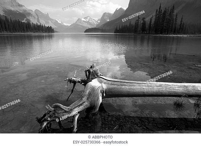 Trunk in Spirit island in Maligne Lake. Jasper. Canada. Black and white