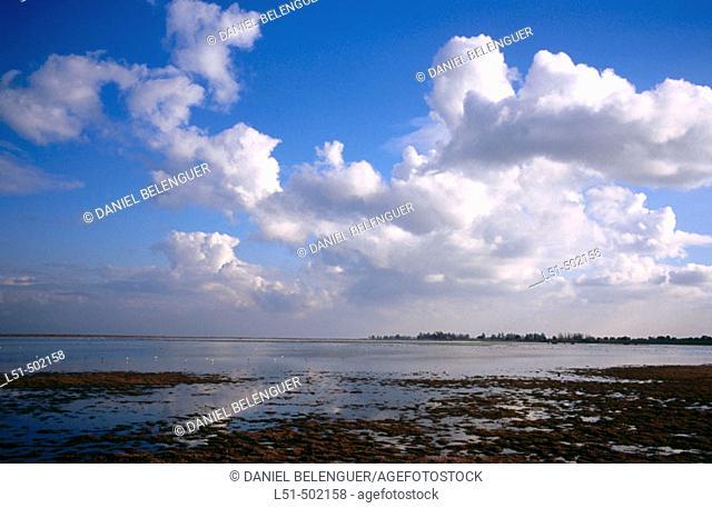 Guadalquivir marshes. Doñana Natural Park. Huelva province. Andalucia. Spain