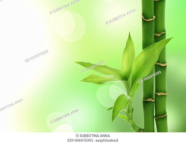 Zen Bamboo