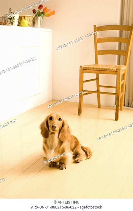 A dog sitting by a countar