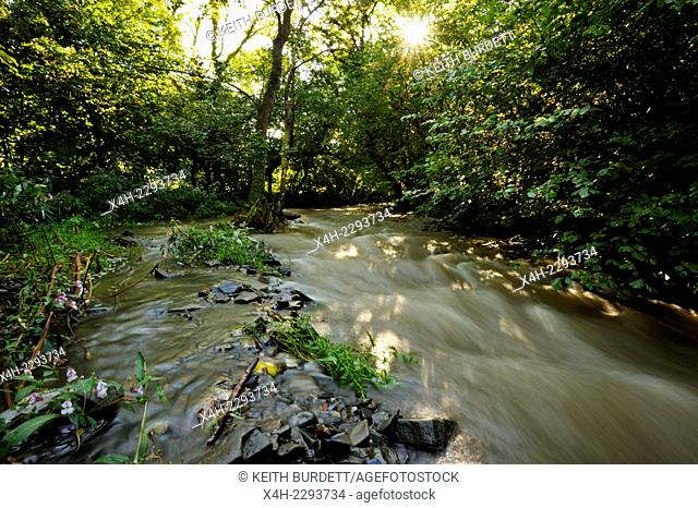River Wyre in spate running through woodland in Autumn, Llanrhystud, Wales, UK