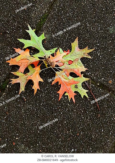 Colored autumn leaves lying on sidewalk