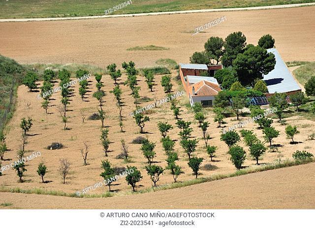 Farm land, Consuegra, Toledo Province, Castilla-La Mancha, Spain