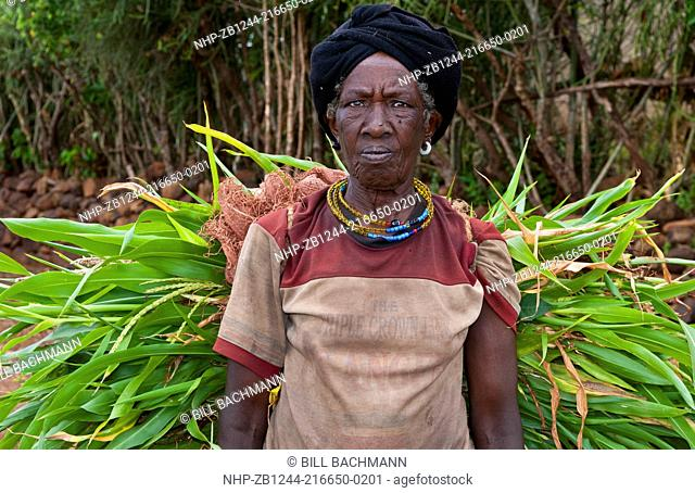 Jinka Ethiopia Africa village Konso tribe in Lower Omo Valley old woman carrying load of branches for hut 13