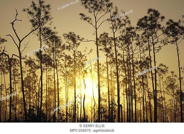 SUNRISE IN SLASH PINE HAMMOCK, EVERGLADES NATIONAL PARK, FLORIDA