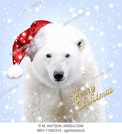 Polar Bear - wearing Christmas hat in falling snow Digital manipulation