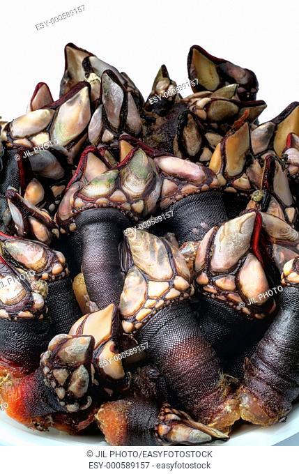 Still life of barnacles  Galicia  Spain