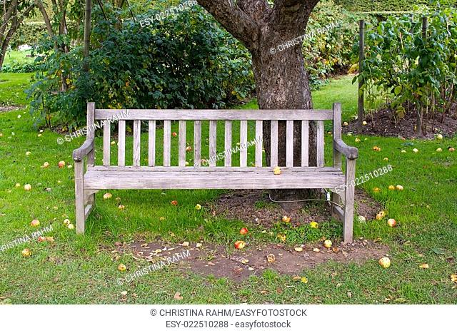 Apple tree, wooden patina bench and fallen fruits on green lawn, Stockholm in October