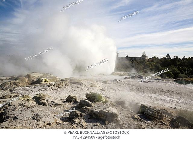 Rotorua North Island New Zealand  Pohutu geyser erupting steaming water from sulphurous mud and rock in Te Puia in Whakarewarewa Thermal Reserve in geothermal...