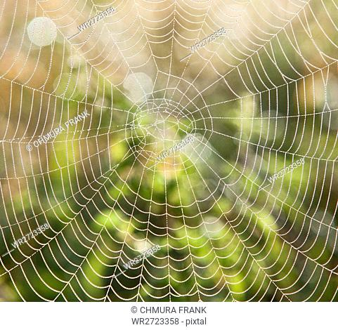 close-up, connection, day, design, detail, dew, dewdrop, drop, droplet, droplets, macro, morning, nature, net, network, pattern, silk, spider, sticky, texture