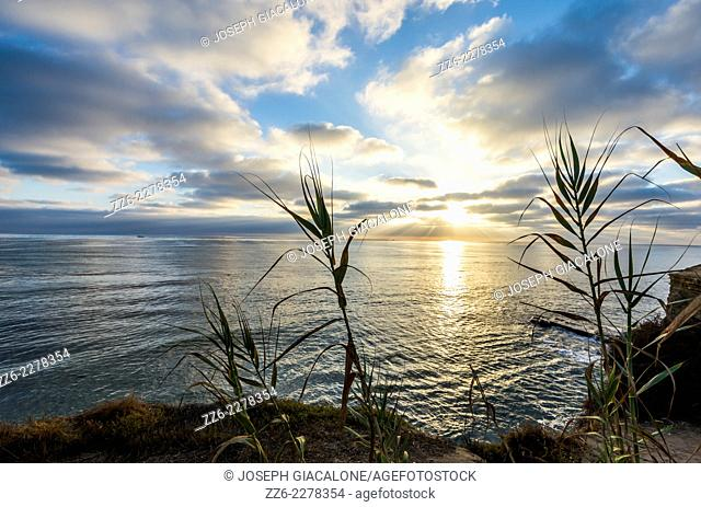 Sunset over the Pacific Ocean framed by plants. Sunset Cliffs Natural Park, San Diego, California, United States