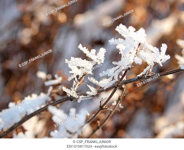 Snow and Ice Crystals on Plants on a Sunny Winter Day