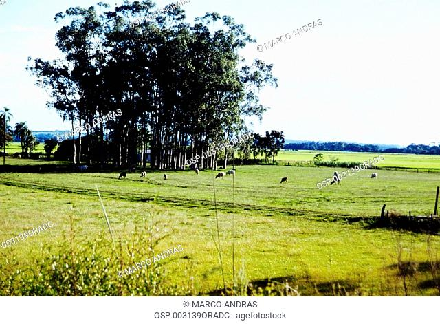 a green farm grass with cattle