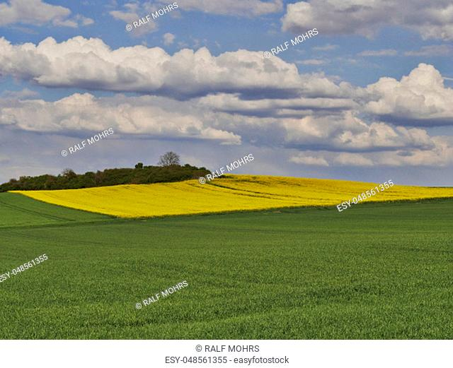 Clouds over a rapeseed and wheat field in spring