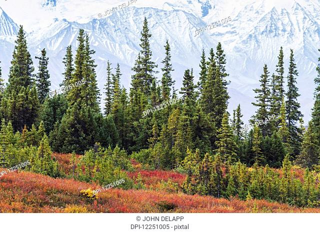 Taiga (boreal) forest and tundra near Wonder Lake in Denali National Park, interior Alaska, with the snow-covered mountains of the Alaska Range near the base of...