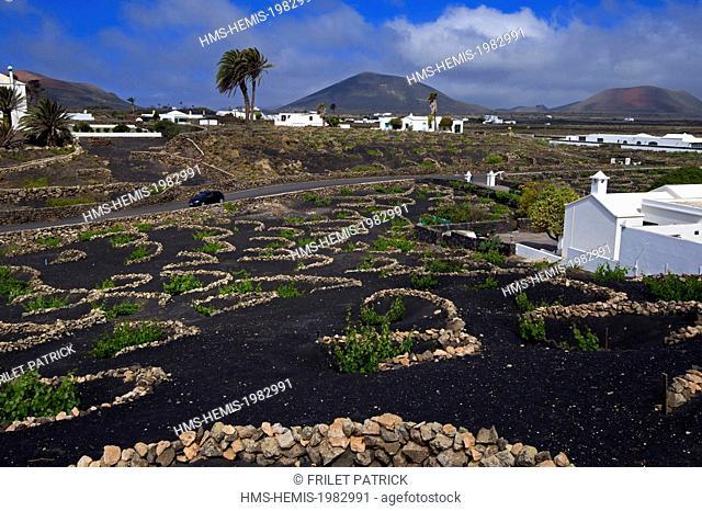 Spain, Canaries Islands, Lanzarote island, the wine valley in la Geria area