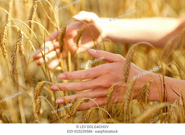 country, nature, summer holidays, agriculture and people concept - close up of young woman hands touching spikelets in cereal field