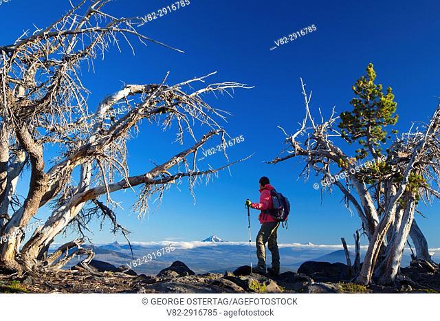 Whitebark pine along Tam McArthur Rim Trail, Three Sisters Wilderness, Deschutes National Forest, Oregon
