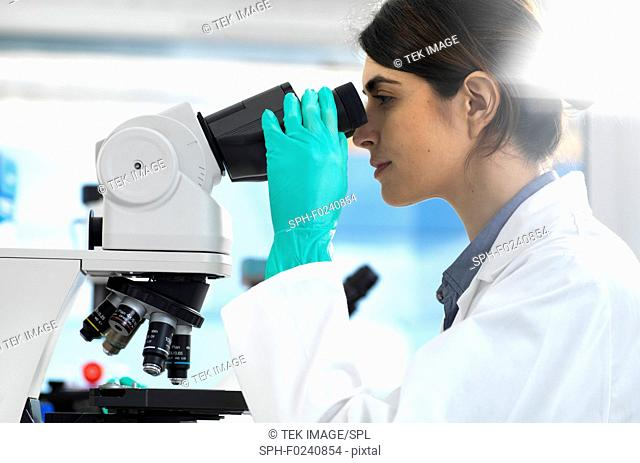Scientist examining specimens under a microscope during a clinical trial in the laboratory