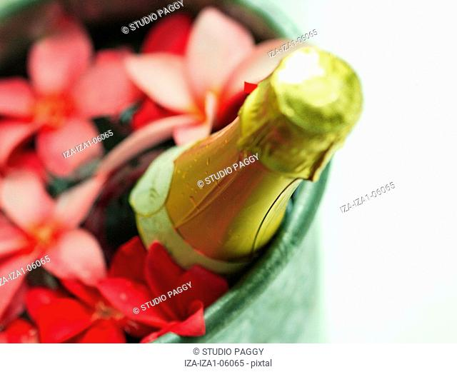 Close-up of a champagne bottle with Frangipani flowers in an ice bucket