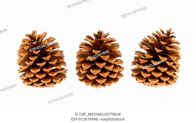 Three pine cones isolated