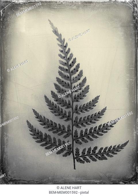 Leaf specimen on display