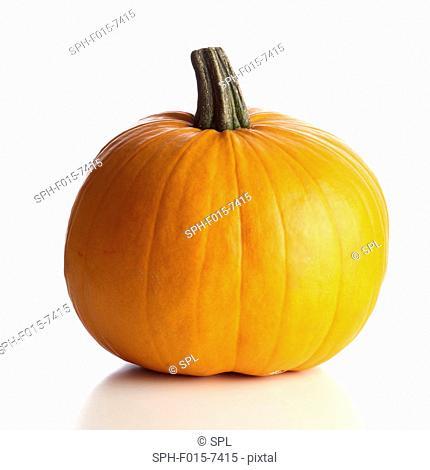 Jack o lantern (Cucurbita pepo) carving pumpkin, studio shot