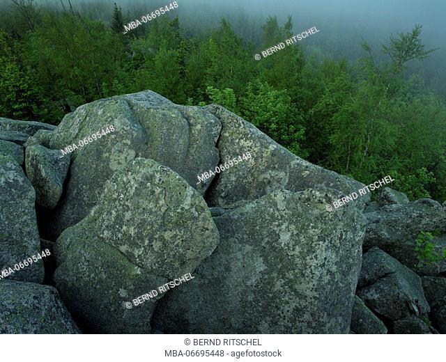 Rocks on the Leistenklippe, Hohnekamm, Harz, Saxony-Anhalt, Germany