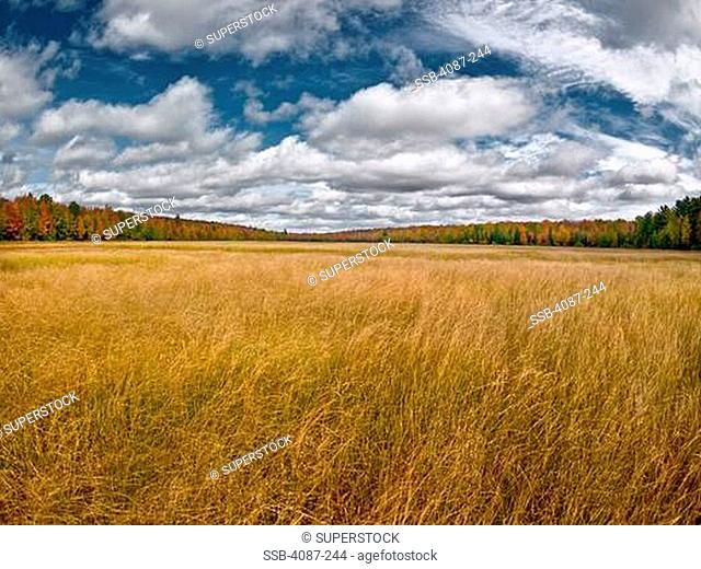 Clouds over a forest, Sylvania Wilderness, Watersmeet Township, Gogebic County, Michigan, USA