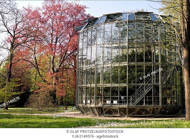 200 years old Camellia in a portable Greenhouse in Pillnitz Castle Garden near Dresden. The Plant has now reached a height of about 8