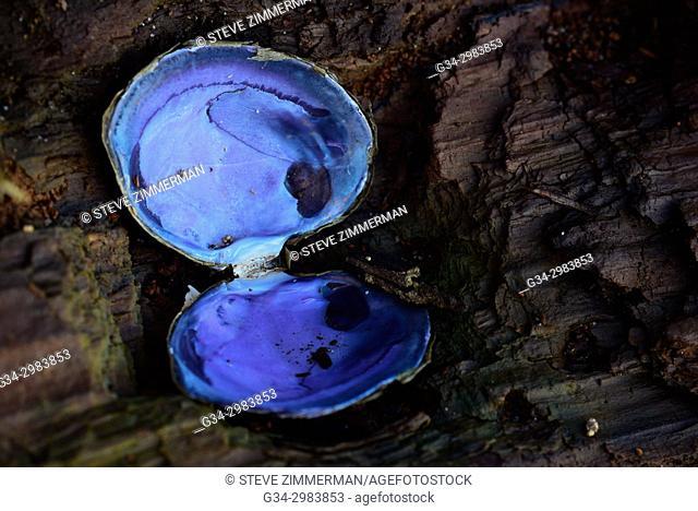Surprise Color. Edgewater Beach, Mukilteo, Washington, USA