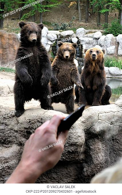 Family of Kamchatka brown bears attracts attention of visitors of ZOO in Brno Bear cubs, Toby and Kuba, were born on January 30