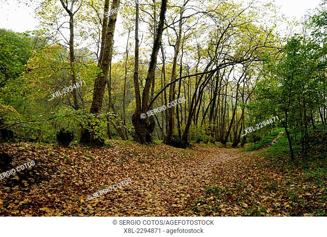 forest in autumn in Hernani, Basque Country, Spain