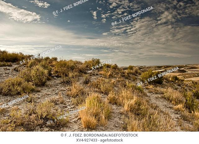 Monegros steppes show a wide range of microsystem and nature habitat, most of them in desertic and dryland. Zaragoza, Spain