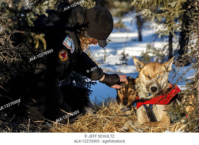 Justin Savidis gives his lead dog, May, a little TLC at the Cripple checkpoint during the Iditarod Sled Dog Race 2014