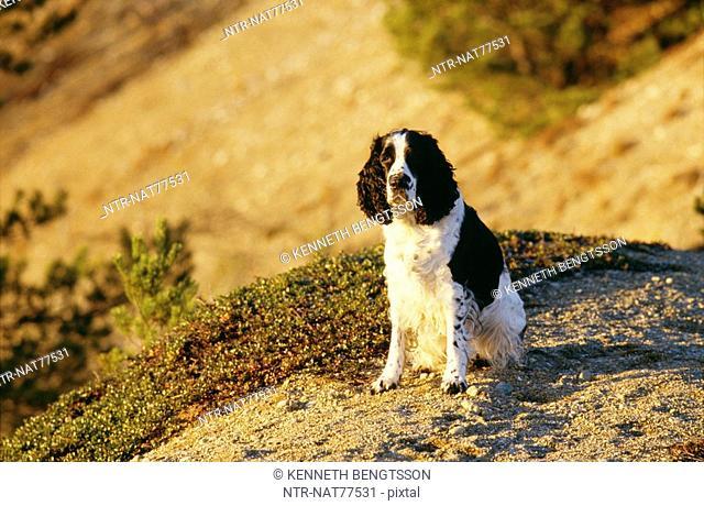 A dog, Sweden