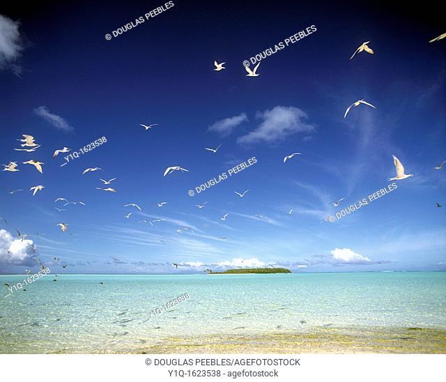 Bird island, Tetiaroa, French Polynesia