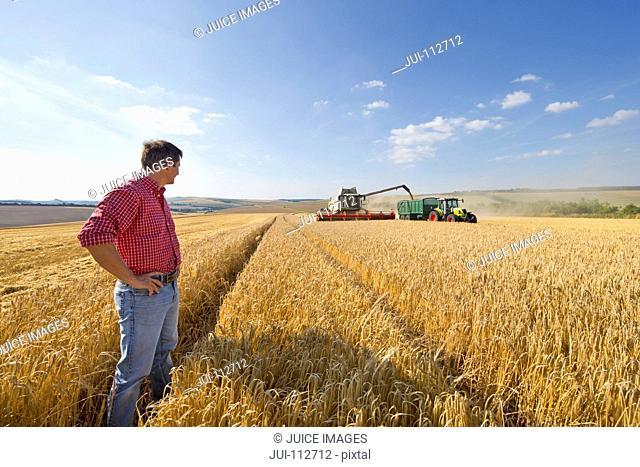 Farmer watching combine harvester fill tractor trailer in sunny barley field